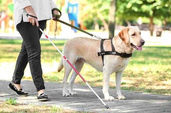 日本盲導犬協会カード,還元率